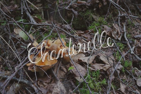 chanterelle, mushroom, ouareau forest, quebec, typography, lettering