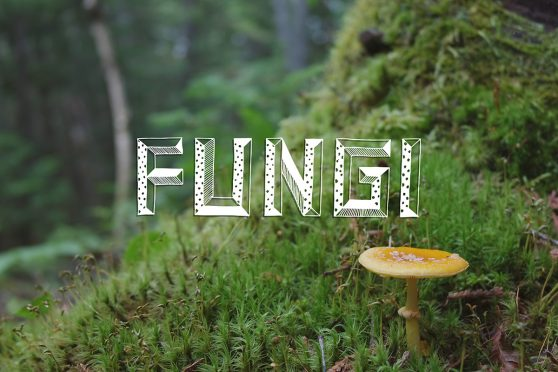 fungi, mushroom, ouareau forest, quebec, typography, lettering