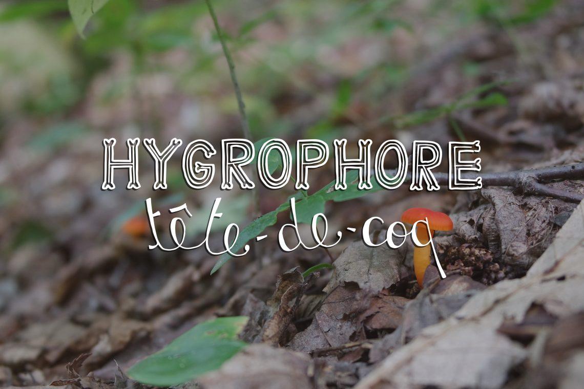 hygrophore tête-de-coq mushroom, ouareau forest, quebec, typography, lettering