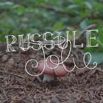 mushroom-typography russule jolie lettering