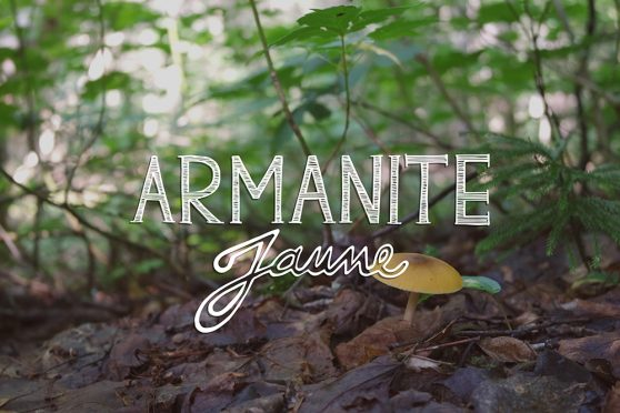 Armanite jaune, mushroom, ouareau forest, quebec, typography, lettering
