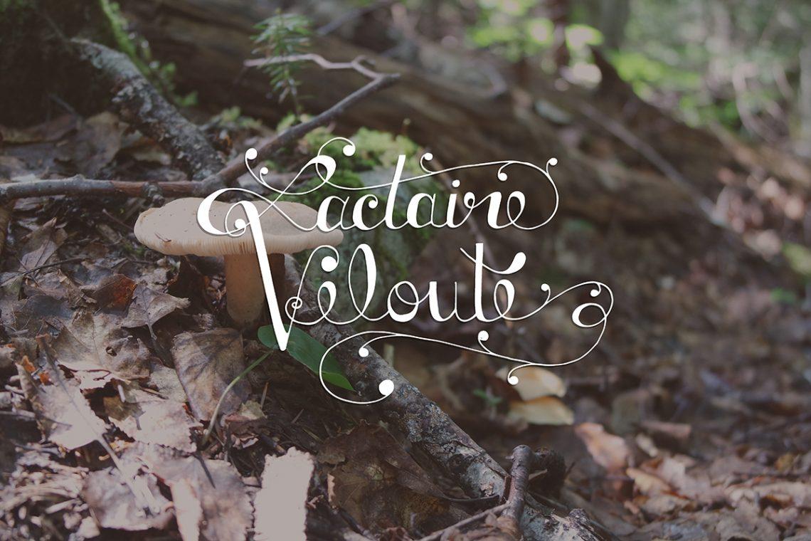 lactaire velouté, mushroom, ouareau forest, quebec, typography, lettering