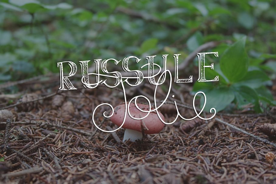 russule jolie, mushroom, ouareau forest, quebec, typography, lettering